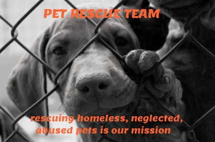 Pet Rescue Team... Saving Street Dogs